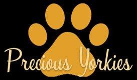 Precious Yorkies - Small Colorful Yorkies